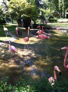 Flamingos at Antwerp Zoo