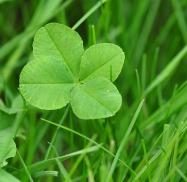 four-leaf-clover-711625_640